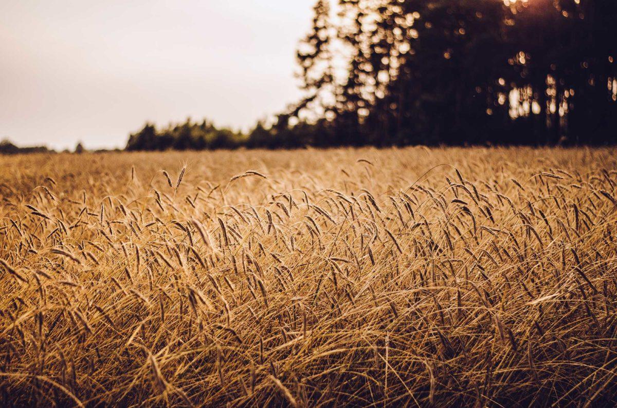 Cedargate Farms Hay